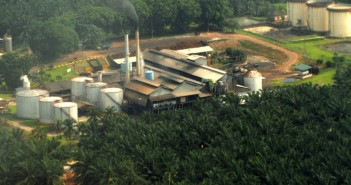 palm_oil_plantation_1100x500